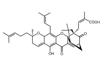 Gambogic acid, ≥98%